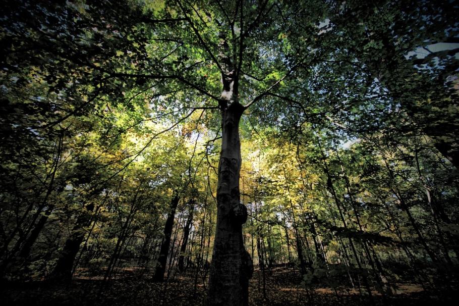 PARK TREE.jpg